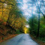 Drumul Șugașului